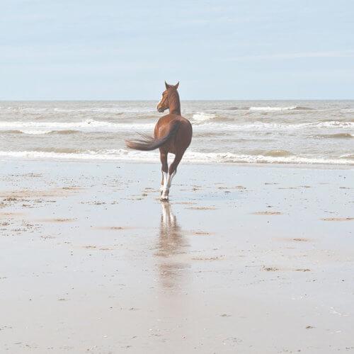 Pahlsteg Tiergestütztes Coaching am Meer