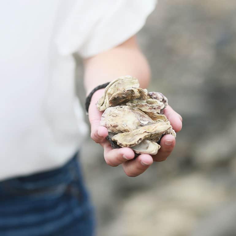 Pahlsteg Tiergestütztes Coaching Muschel für Muschel