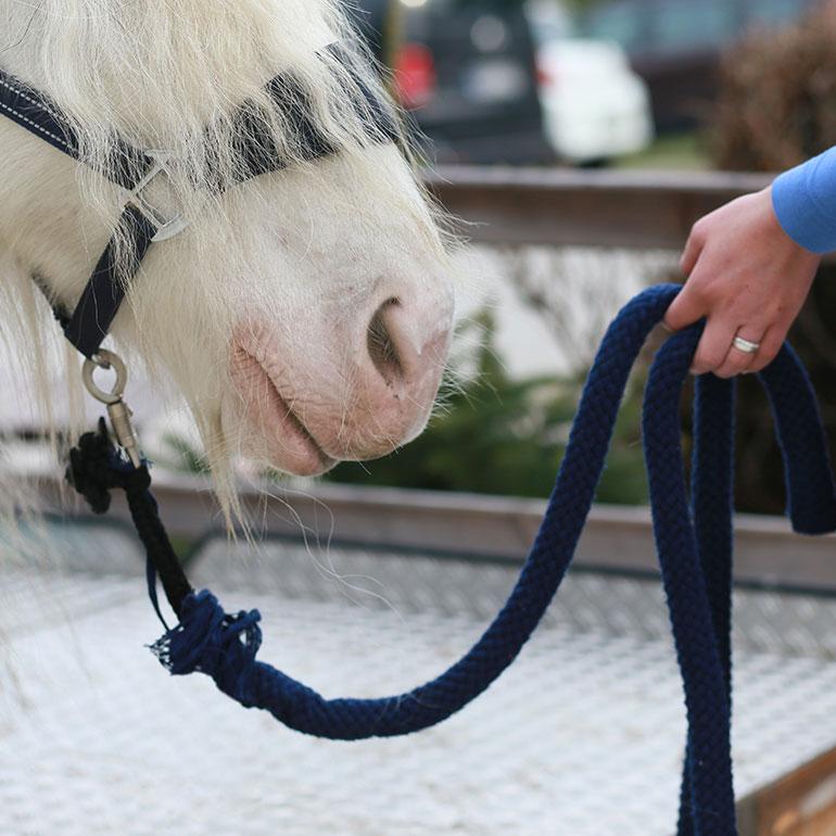 Pahlsteg Tiergestütztes Coaching Aurich Leer Emden