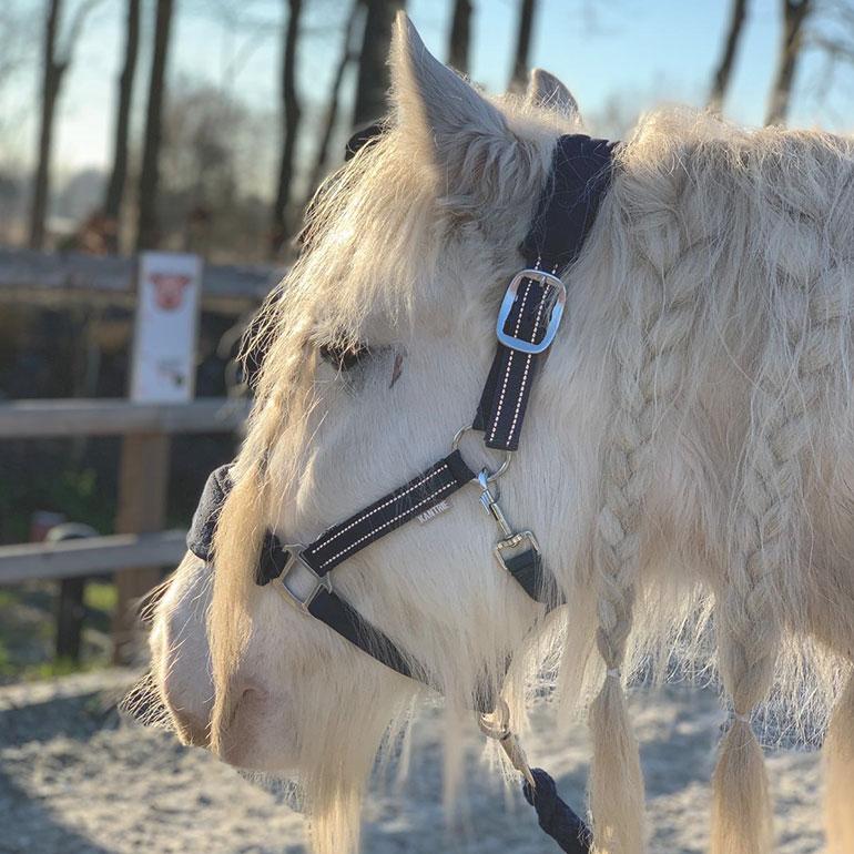 Schneewittchen Coaching mit Pferden